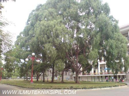Pepohonan rindang yang terdapat di sebelah selatan bangunan Gedung Pusat UGM, yang menciptakan iklim mikro yang sejuk dan teduh