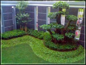 taman depan rumah 09