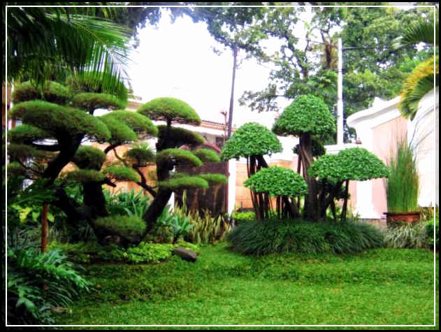 taman rumah minimalis-24