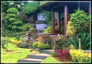 taman belakang rumah 03